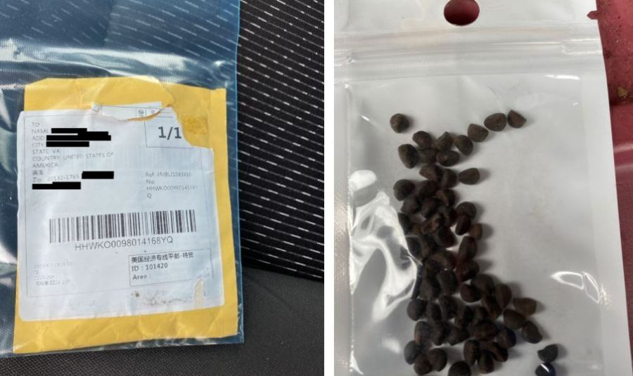 "Several Virginia residents have informed the department that they have received packages in the mail containing seeds that appear to have come from China. In an email, the department states that the type of seeds in the packages are unknown and ""may be invasive plant species."" (photos provided by the VDACS)"