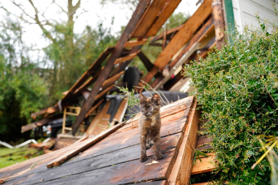 A cat walks through debris at Chris Johnson's home in Lake Charles, La., after Hurricane Laura moved through the state. Johnson stayed in his home as the storm passed. (AP Photo/Gerald Herbert)