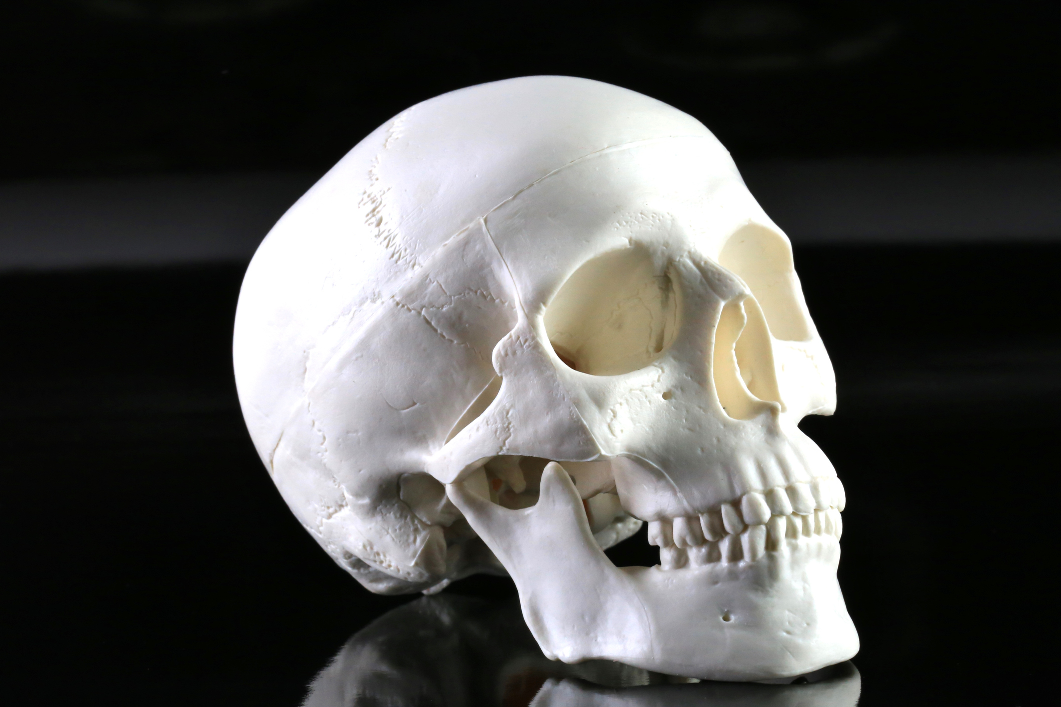 Human Skull Model on a black background