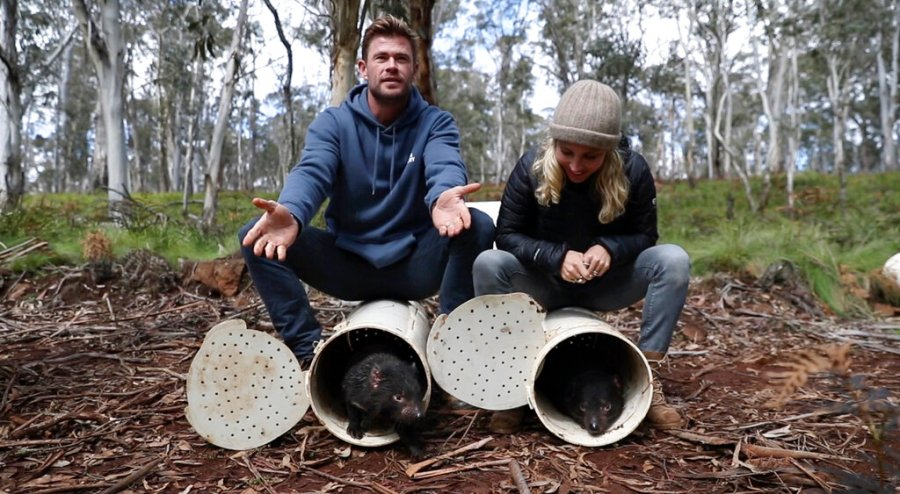 Actors Chris Hemsworth, left, and Elsa Pataky help release Tasmanian Devils into the wild at Barrington Tops, New South Wales state, Australia. (Cristian Prieto/WildArk via AP)