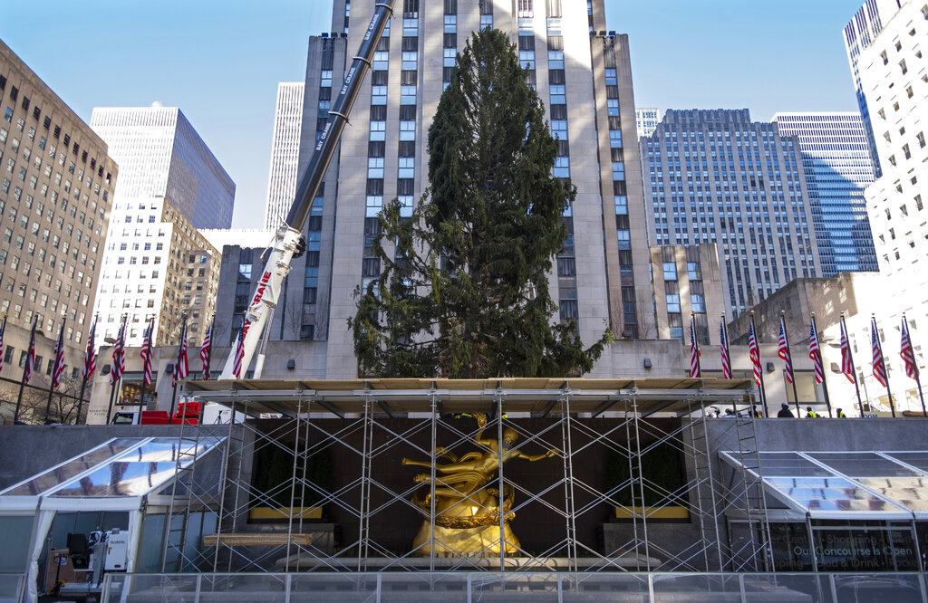 The 2020 Rockefeller Center Christmas tree, a 75-foot tall Norway spruce that was acquired in Oneonta, N.Y., is secured on a platform at Rockefeller Center, in New York. The tree lighting ceremony, scheduled for Wednesday, Dec. 2, will be a mask-mandated, time-limited, socially distanced locale due to the coronavirus pandemic. (AP Photo/Craig Ruttle, File)