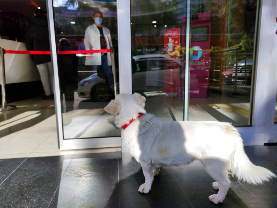Devoted dog Boncuk waits at the entrance of a medical care facility in the Black Sea city of Trabzon, Turkey, Tuesday, Jan. 19, 2021. Boncuk has spent five days waiting in front of the hospital where her sick owner was receiving treatment. (DHA via AP)