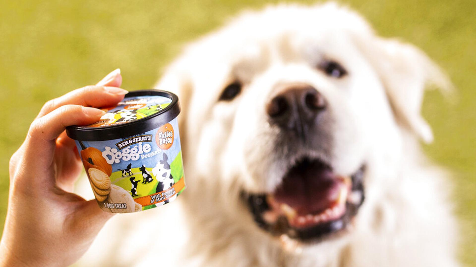 Ben & Jerry's dog treats