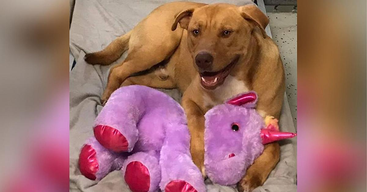 Dog with pet unicorn