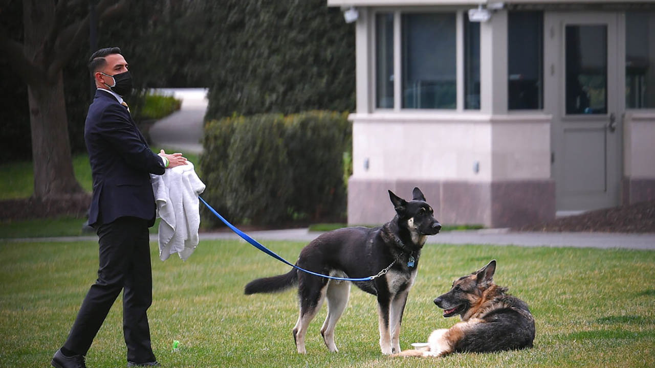 The Biden dogs Champ and Major