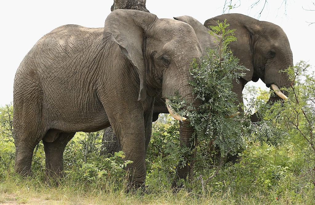 General Views of Kruger National Park