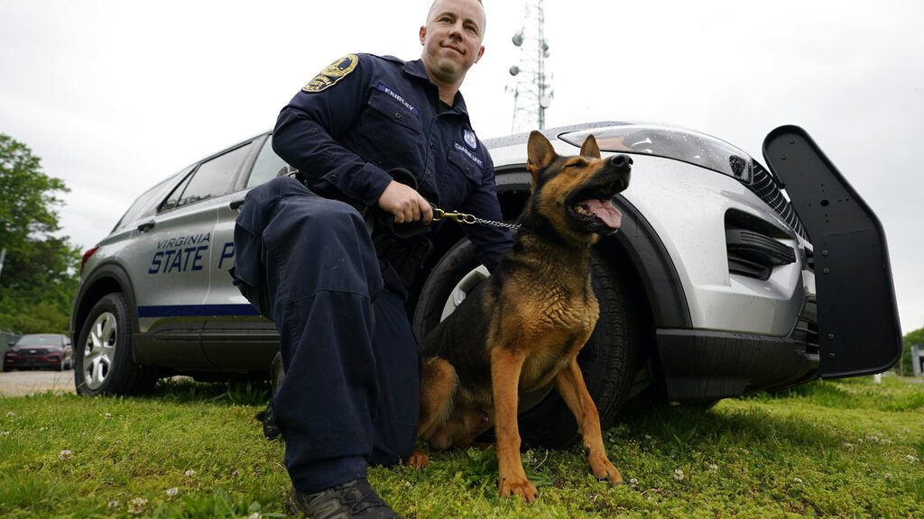 Drug-Sniffing Dogs retiring amid legalization of pot