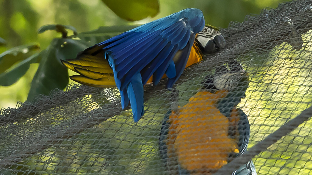 Lonely macaw