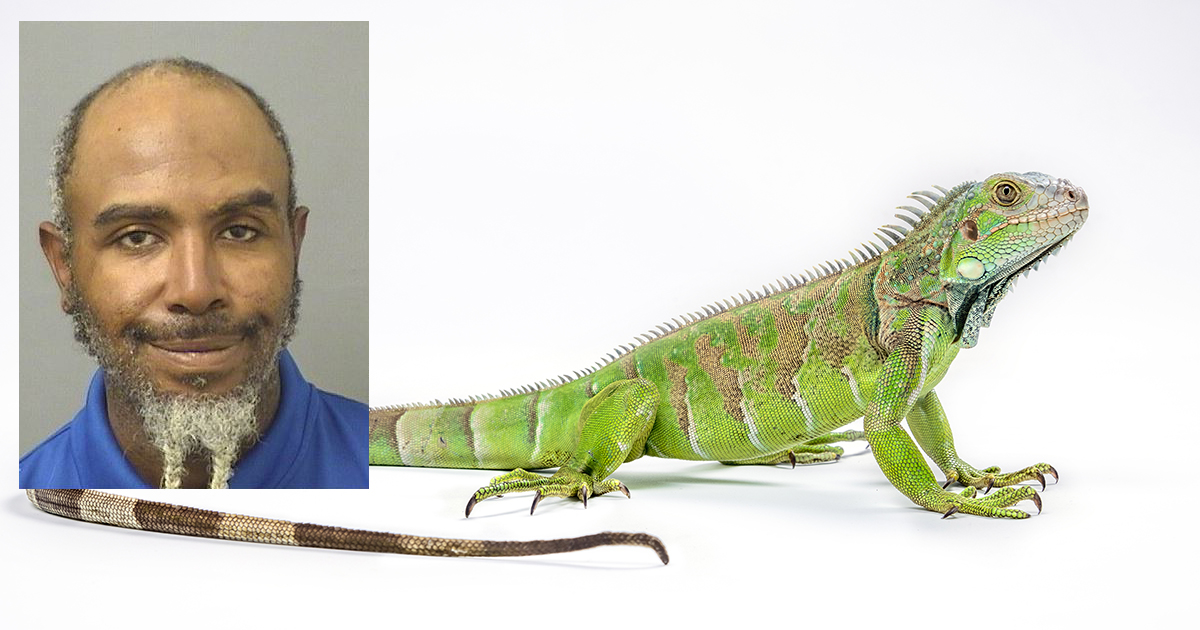 PJ Nilaja Patterson in a January 15, 2021, Palm Beach County Jail booking photo. Iguana via (Getty Images)