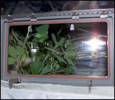 - seeds - Astronauts don't do laundry in space. NASA wants to tackle the stinky challenge | KTAB
