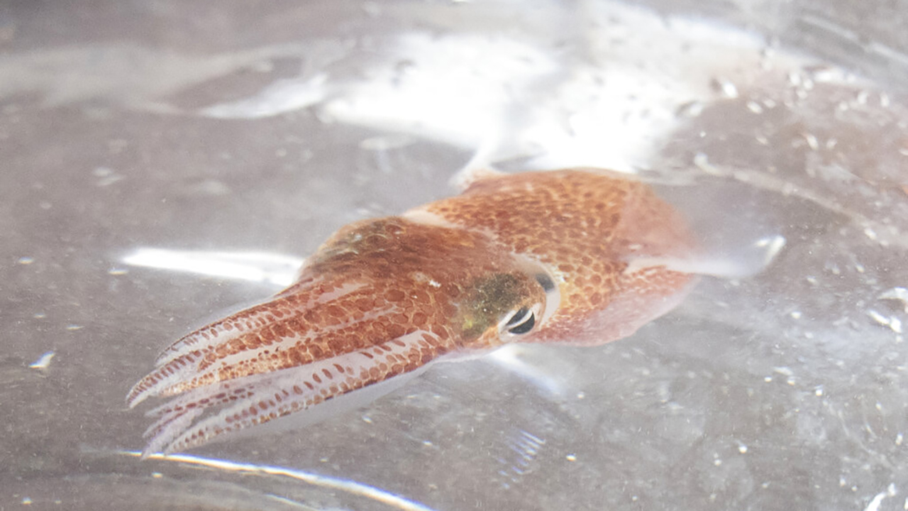 Squid in Space