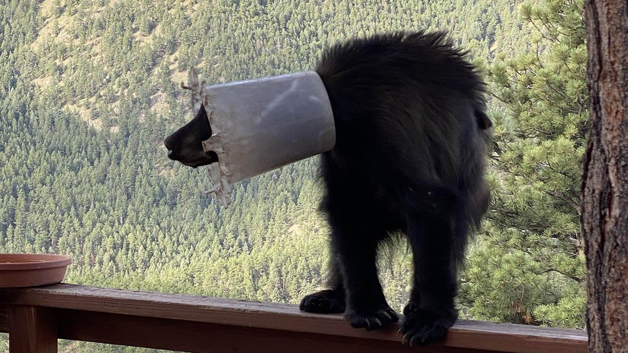 Bear Bucket Head