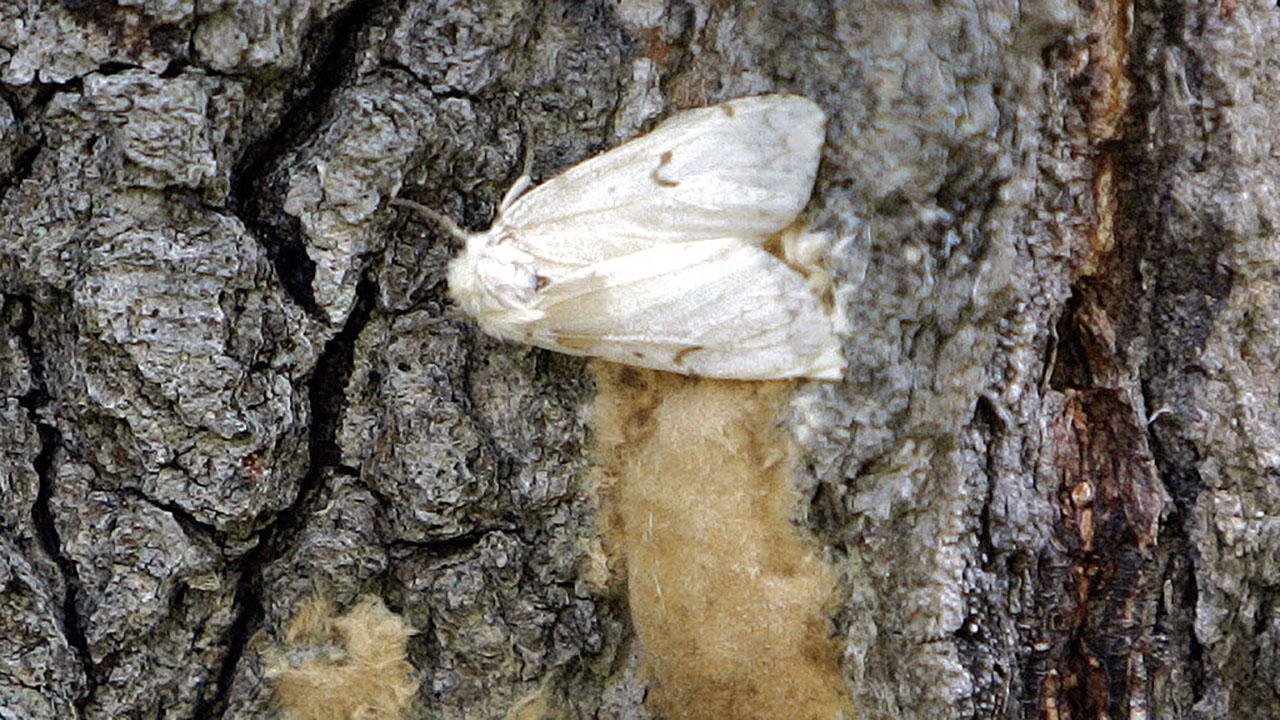 Moth Name