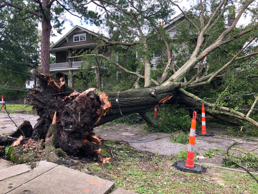 A massive oak, toppled by Hurricane Ida, stretches across a New Orleans street, stretching utility lines and resting against the fronts of two houses on Monday, Aug. 30, 2021. (AP Photo/Kevin McGill)