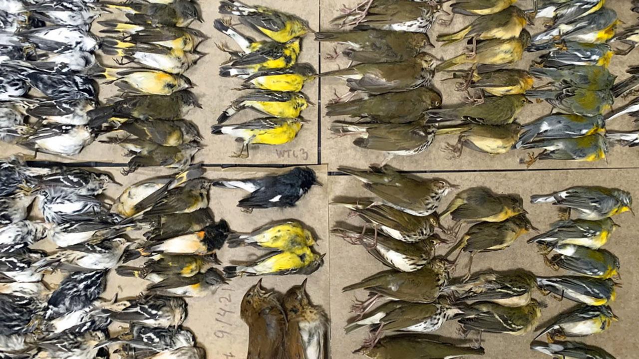 Bird Deaths